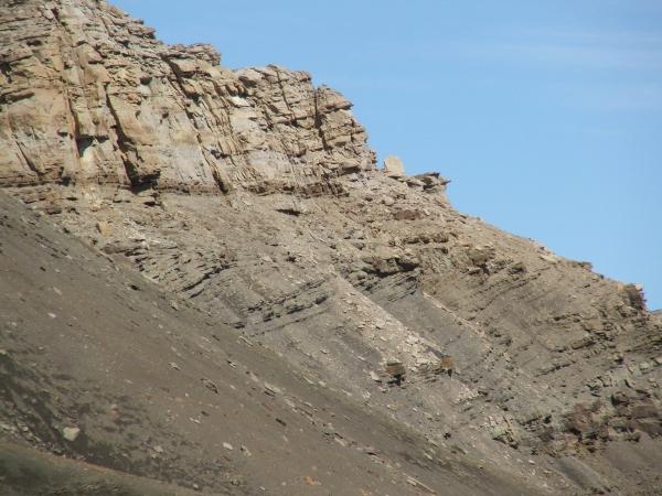 Cerro Escondido outcrop, southern Chile (c 2009 clastic detritus)